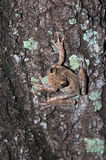 在结构树的青蛙 库存图片
