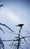 在结构树的鸟 库存图片