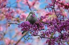 在结构树的鹦鹉 免版税图库摄影