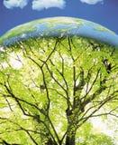 在结构树里面的地球 库存照片