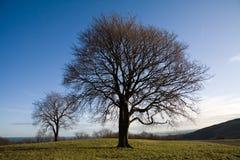 在结构树附近的爱丁堡小山 免版税库存图片