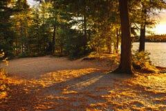 在结构树附近的秋天湖 库存照片