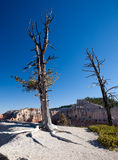 在结构树附近的贫瘠bryce峡谷沙漠 免版税图库摄影