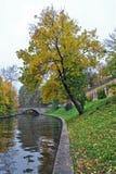 在结构树附近的运河 库存图片