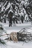 在绳索包裹的收集的草丛在雪说谎在冬天森林里 免版税图库摄影