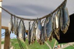 在绳索的干鱼 免版税库存照片