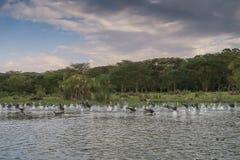 在维多利亚湖的自然场面在肯尼亚,非洲 免版税库存图片