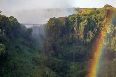 在维多利亚瀑布的热带峭壁 免版税库存图片