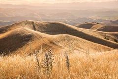 在绵延山的日落在Marlborough地区,新西兰 库存照片