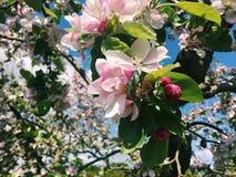 在绽放的开花 图库摄影