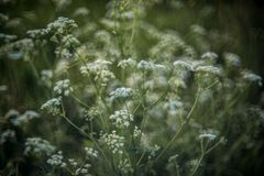 在绽放的新春天自然 免版税图库摄影