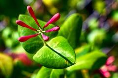 在绽放的明亮的生动的美丽的花 库存照片