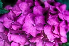在绽放的明亮的生动的美丽的花 免版税库存照片