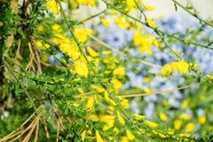在绽放的春天结构树 库存照片