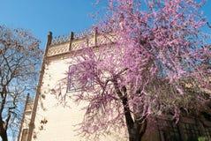 在绽放的树在广场de las美洲在塞维利亚在安大路西亚的心脏 免版税图库摄影