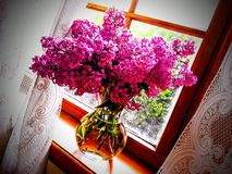 在绽放的桃红色和淡紫色丁香 库存照片