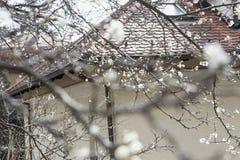 在绽放的梦想的白花 免版税库存图片