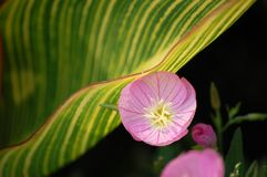 在绽放的紫色花 库存图片