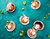 在绿松石背景的未加工的被打开的贝类扇贝 顶视图 背景概念藏品查出海螯虾柠檬海鲜白色 免版税库存图片