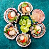 在绿松石背景的未加工的被打开的贝类扇贝 顶视图 背景概念藏品查出海螯虾柠檬海鲜白色 图库摄影