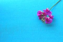 在绿松石背景的桃红色花 库存照片