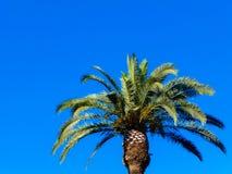 在绿松石背景的棕榈树 图库摄影