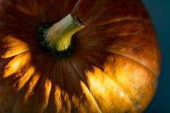 在绿松石背景的黄色南瓜 明亮的南瓜照片 库存照片