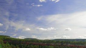 在绿色具球果森林的白色云彩 股票视频