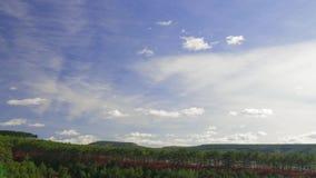 在绿色具球果森林,时间间隔的白色云彩 股票视频