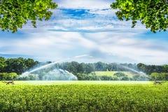 在绿色农田的工业灌溉设备系统 库存照片
