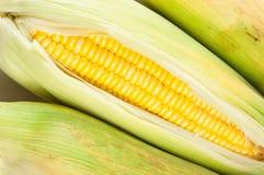 在绿色叶子之间的玉米棒子 库存图片
