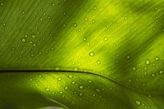 在绿色叶子和阳光的雨珠 免版税库存图片