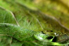 在绿色叶子宏指令的水下落 库存图片