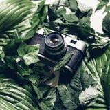 在绿色叶子的减速火箭的影片照相机,顶视图 减速火箭的技术哥斯达黎加 免版税库存照片