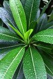 在绿色叶子的水下落 免版税库存照片