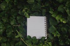 在绿色叶子的笔记本 免版税库存图片
