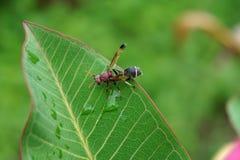 在绿色叶子的纸质黄蜂 免版税库存照片