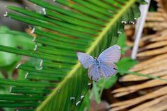 在绿色叶子的美丽的蝴蝶 库存照片