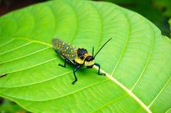 在绿色叶子的蚂蚱 免版税库存图片