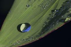 在绿色叶子的露水小滴 库存图片