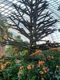 在绿色叶子surronded的橙色花里面 免版税库存图片