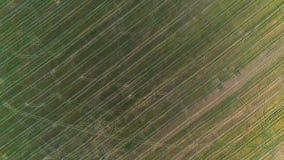 在绿色和黄色领域早期的春天,空中全景照片上的飞行 免版税库存照片