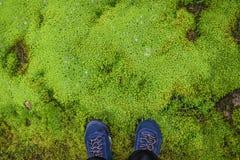 在绿色地毯背景的鞋子有青苔的 库存照片