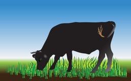 在绿色域的母牛 向量例证