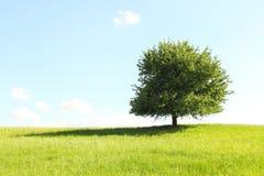 在绿色域的结构树 库存照片