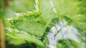 在绿色夏天叶子的水doplet 免版税库存照片