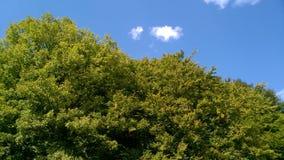 在绿色山的白色积云 库存照片