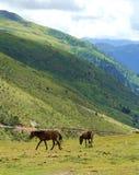 在绿色山脉前面的两匹马 免版税库存照片