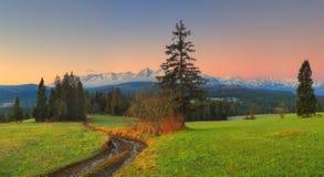 在绿色山谷的早晨 库存照片