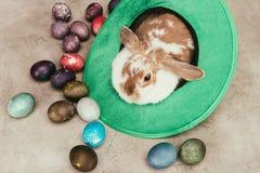 在绿色帽子的家兔大角度看法用复活节彩蛋 免版税库存图片